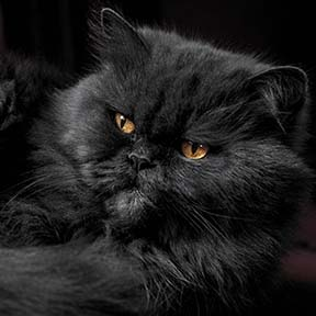 thumb_cat05
