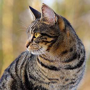 thumb_cat13